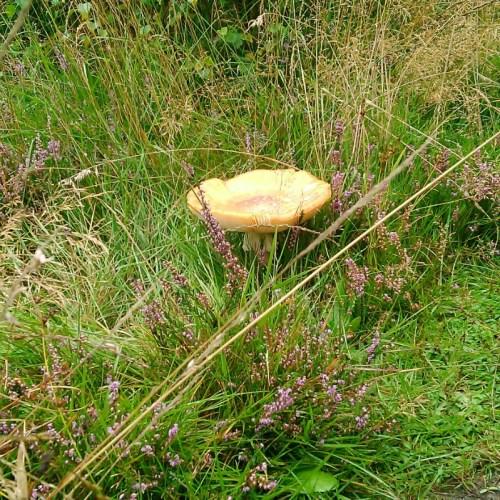 Fairy mushroom!