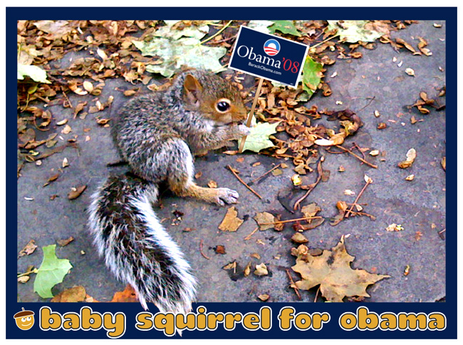 Baby Squirrel for Obama