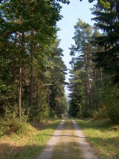 Dippoldiswalder Heide