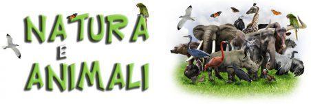 Chi siamo, Natura e Animali