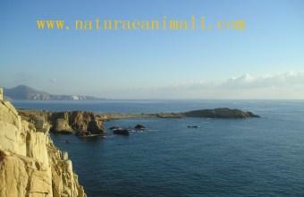Il mare e le sue coste
