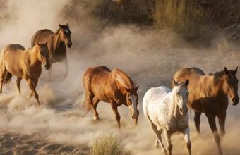 Cavalli, animali selvaggi o addomesticati