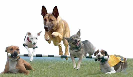 addestramento di cani