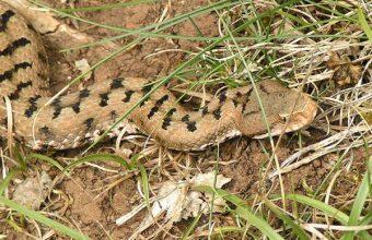 Serpenti, rettili di Terra: curiosità e informazioni