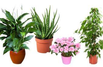 Le piante da appartamento, come sceglierle
