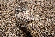 gufo camouflage in natura 2
