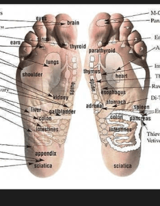 Vita flex foot chart using young living essential oils also free oil downloads rh natural aromatherapy benefits