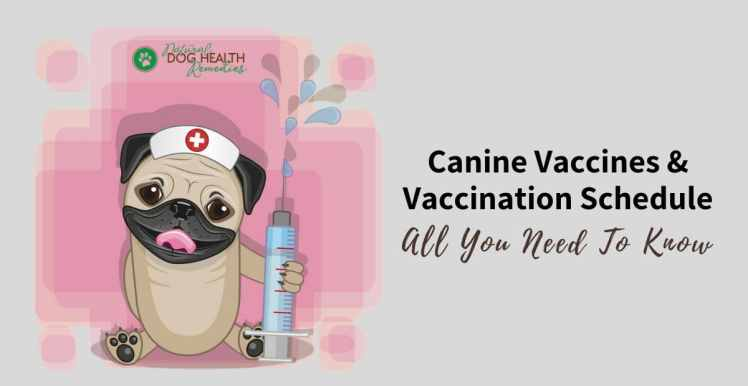 Canine Vaccines and Vaccination Schedule - A Dog Owners' Guide