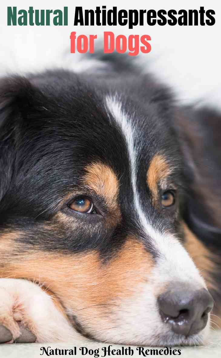 depression in dogs signs
