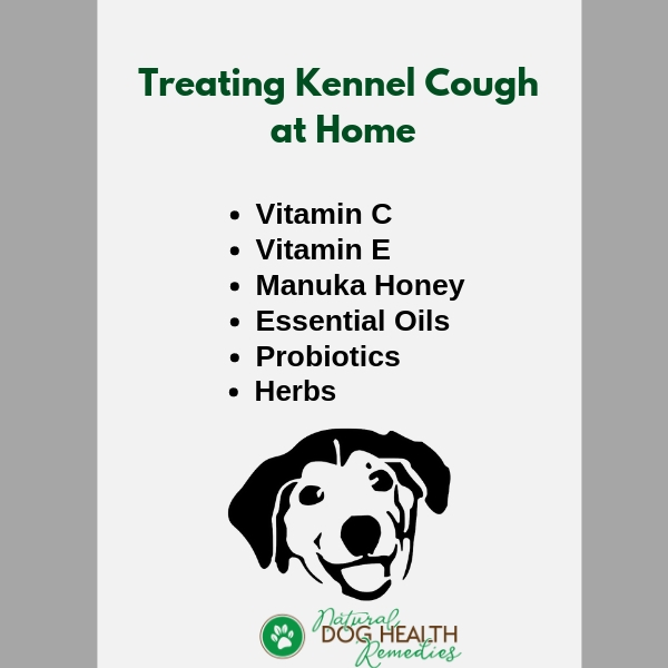 Treating Kennel Cough in Dogs at Home & Prevention