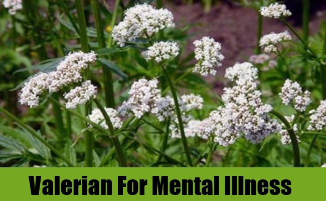 Valerian For Mental Illness