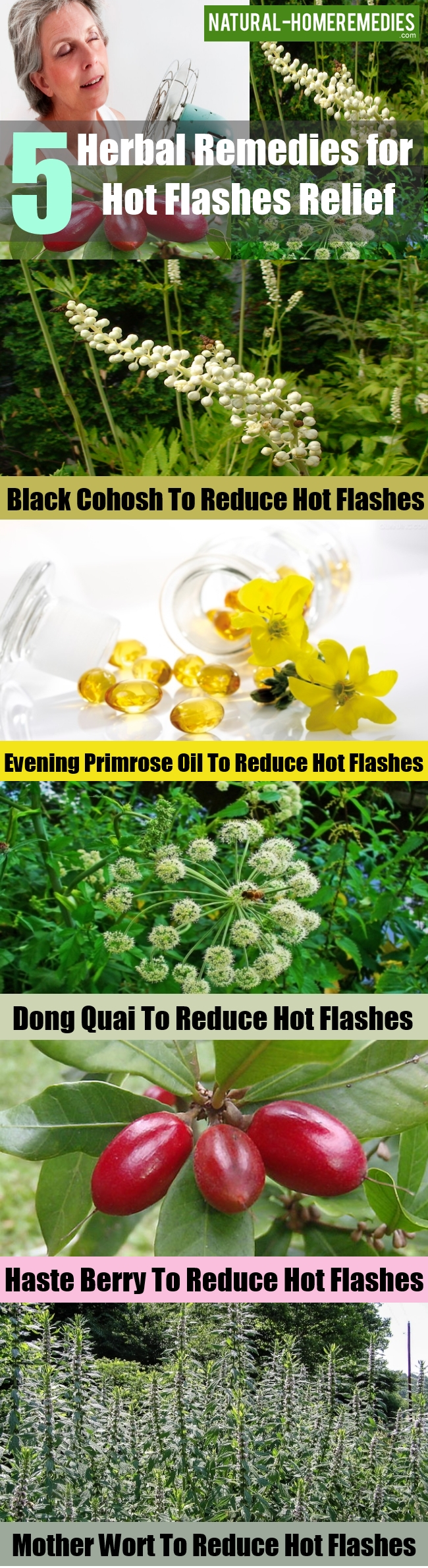 Herbal Remedies for Hot Flashes Relief