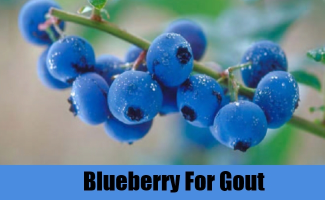 Blueberry For Gout