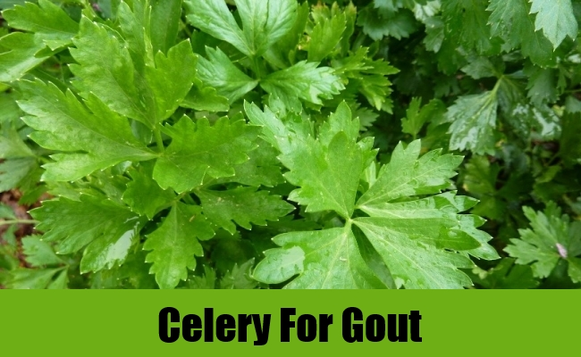 Celery For Gout