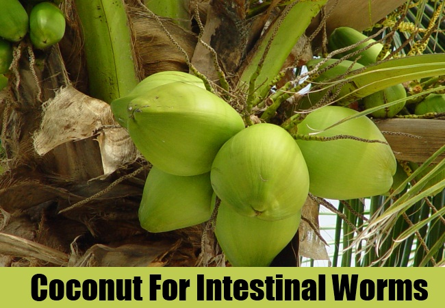 Coconut For Intestinal Worms