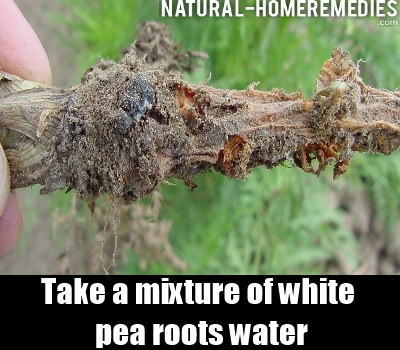 white pea roots