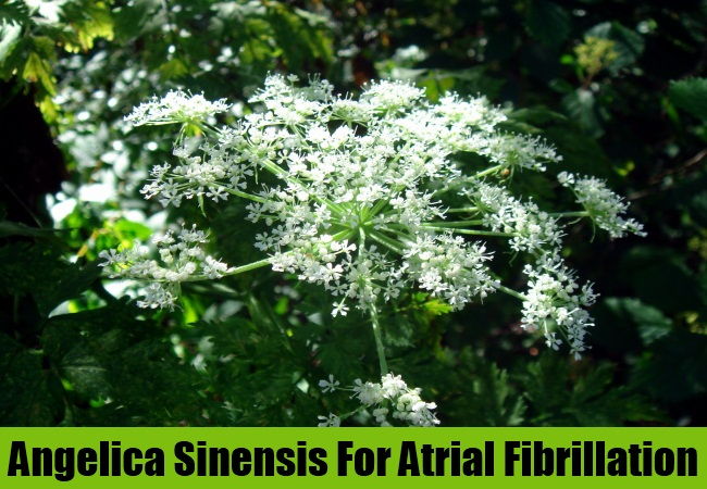 Angelica Sinensis For Atrial Fibrillation