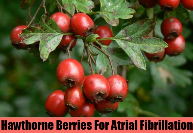 Hawthorne Berries For Atrial Fibrillation