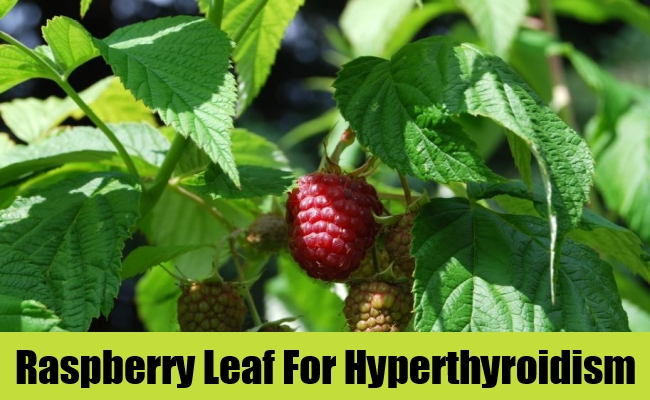 Raspberry Leaf For Hyperthyroidism