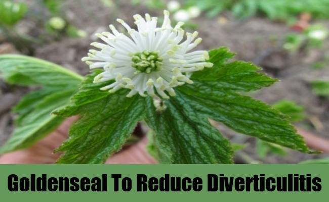 Goldenseal To Reduce Diverticulitis
