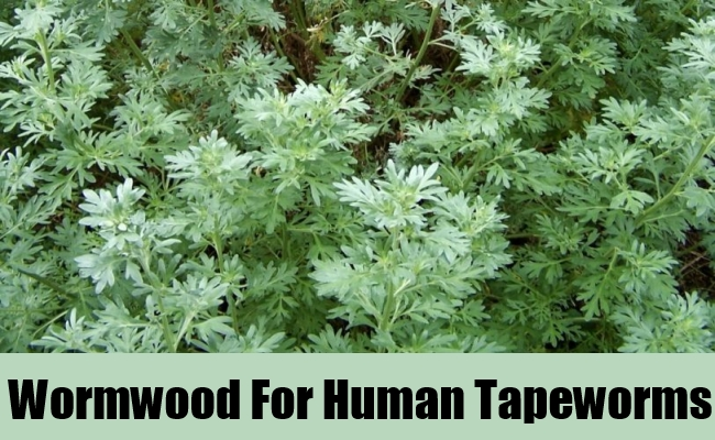 Wormwood For Human Tapeworms