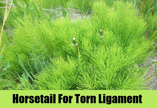 Horsetail For Torn Ligament