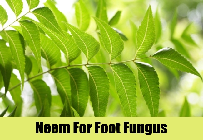 Neem For Foot Fungus