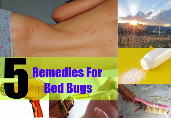 5 Remedies For Bed Bugs