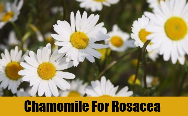 Chamomile For Rosacea