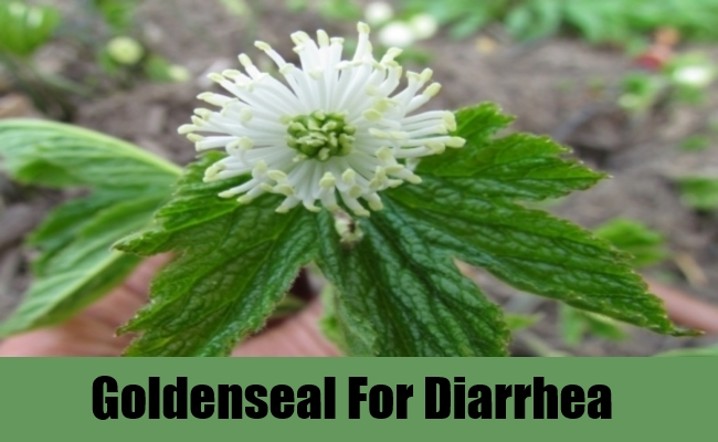 Goldenseal For Diarrhea