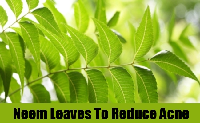 Neem Leaves To Reduce Acne