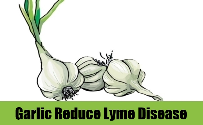 Garlic Reduce Lyme Disease