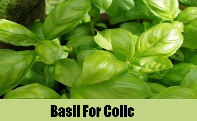 Basil For Colic