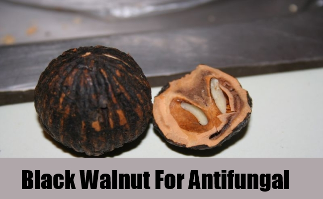 Black Walnut For Antifungal