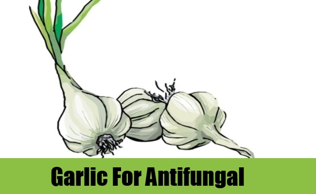 Garlic For Antifungal