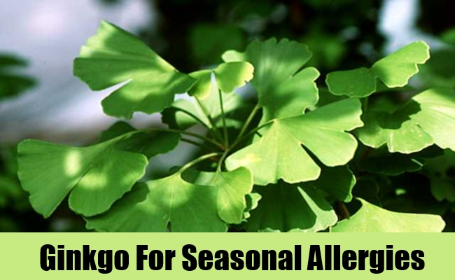 Ginkgo For Seasonal Allergies