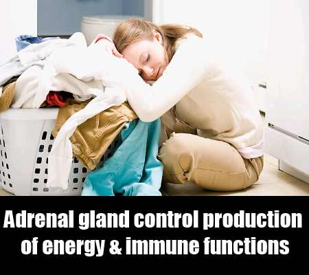 What Is The Role Of Adrenal Glands