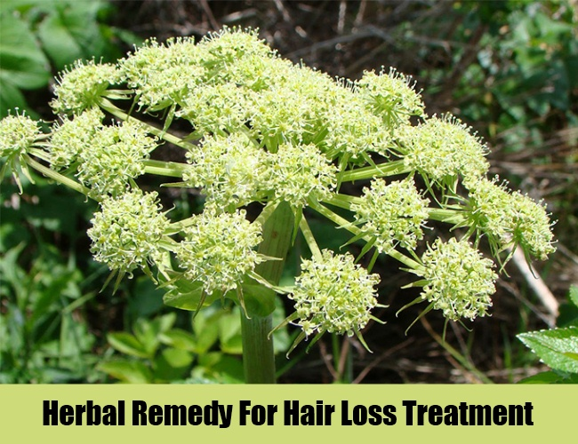 Herbal Remedy For Hair Loss Treatment