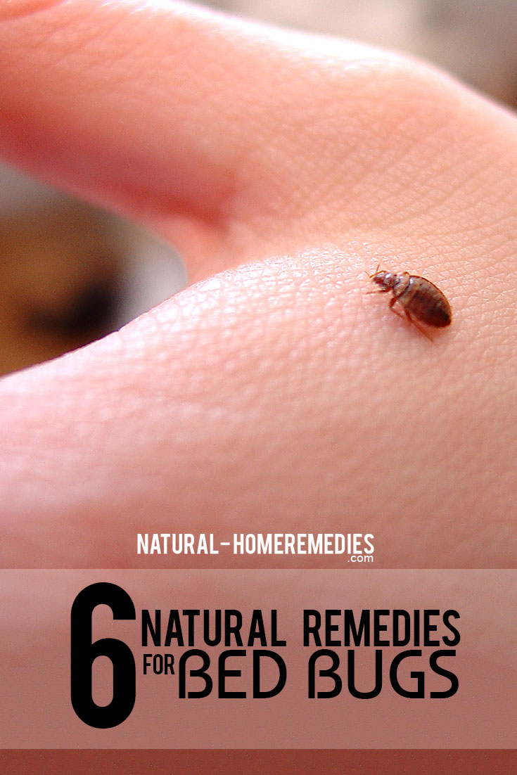 6-natural-remedies-for-bed-bugs