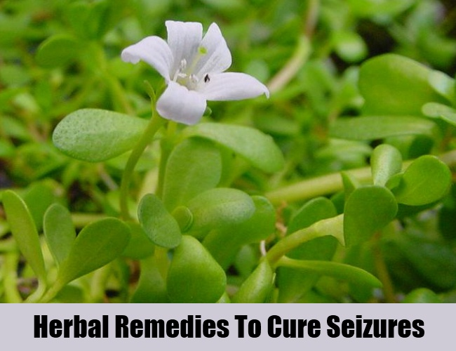 Herbal Remedies To Cure Seizures