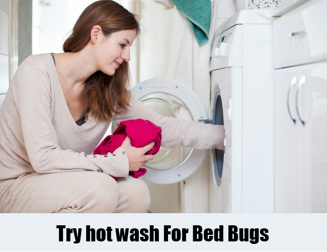 Try hot wash For Bed Bugs