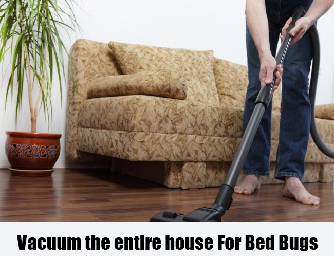 Vacuum the entire house For Bed Bugs