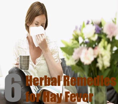 6 Powerful Herbal Remedies for Hay Fever