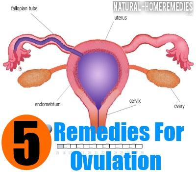 ovulation remedies