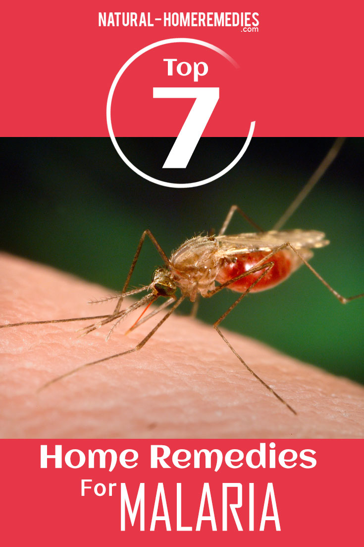 Top-7-Home-Remedies-For-Malaria