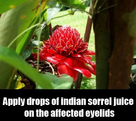Indian Sorrel
