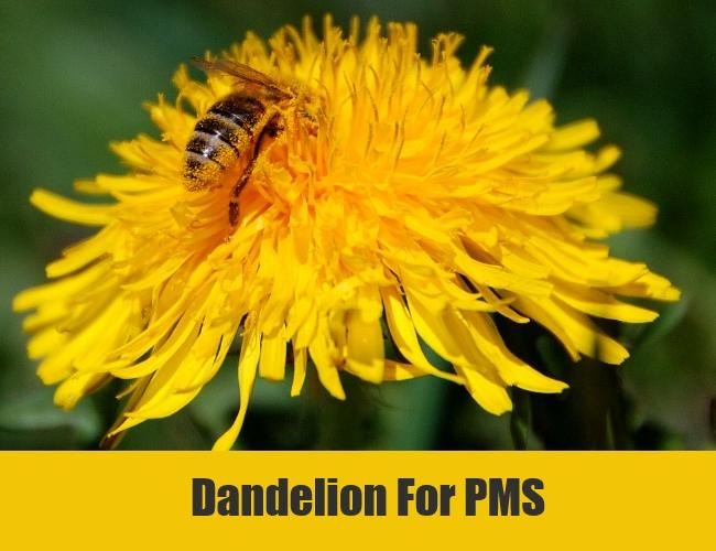 Dandelion For PMS