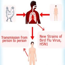 Home Remedies For Bird Flu