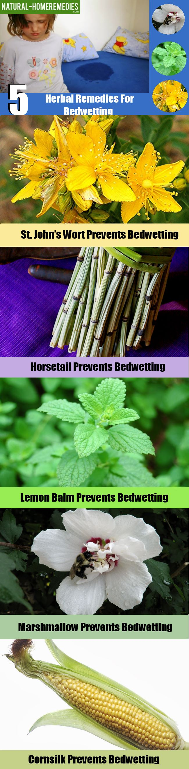 5 Best Herbal Remedies For Bedwetting