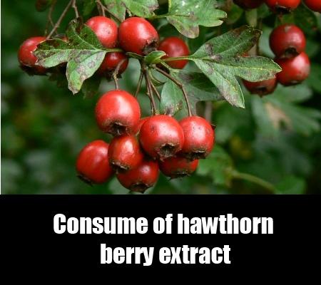Hawthorn Berry